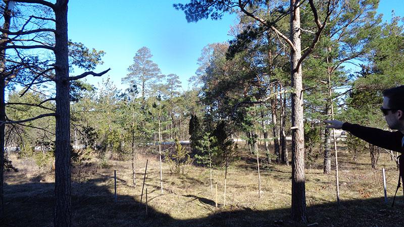 Skogsdunge.